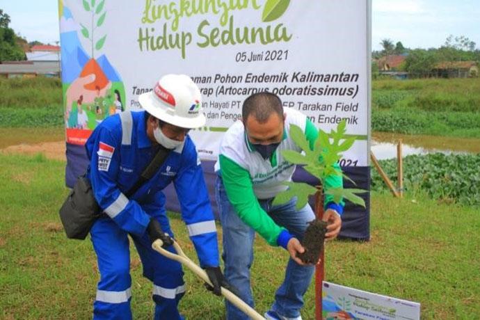 Peringati Hari Lingkungan Hidup, PEP Tarakan Lakukan Program CSR Ini